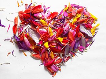 brenda-goodell-services-flower-essence-counseling